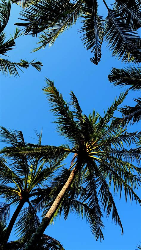 palm trees background palm tree backgrounds 183