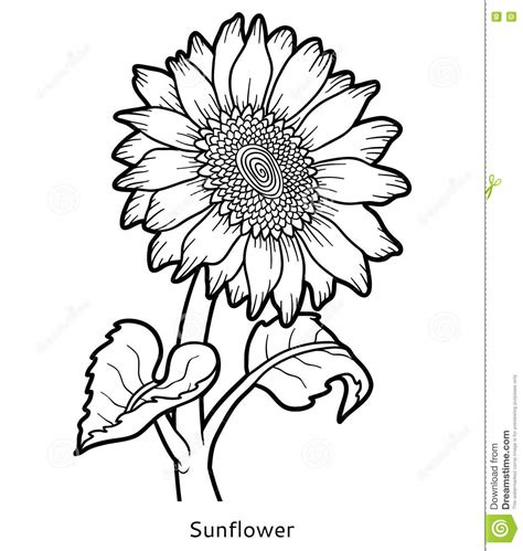 Flowers Free Sul coloring book flower sunflower stock vector image 79731334