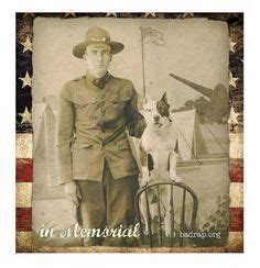 Sergeant Stubby Timeline 1000 Images About Pitbulls As Dogs On Sergeant Stubby Pit Bull And