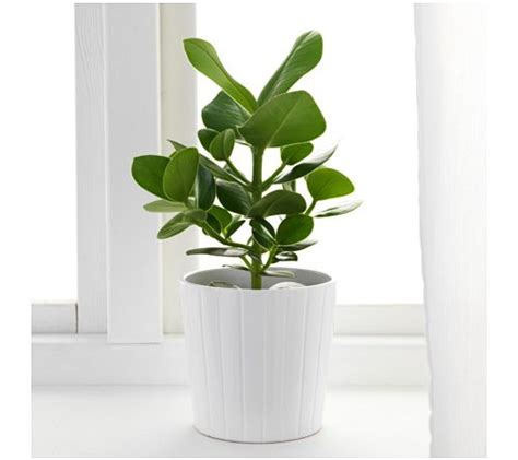 imagenes de plantas verdes de interior plantas de interior todo lo que necesitas saber sobre