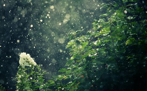 Rainy Summer by Hd Wallpaper And Background Image 1920x1200
