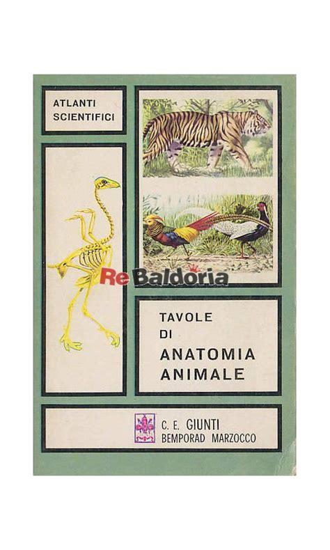 tavole anatomia tavole di anatomia animale v muedra giunti bemporad
