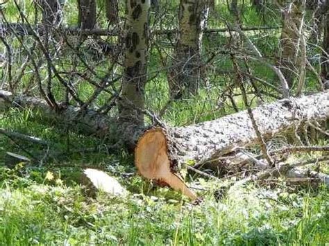 dispose of dead dispose of dead trees on your property charitably homesteading and livestock