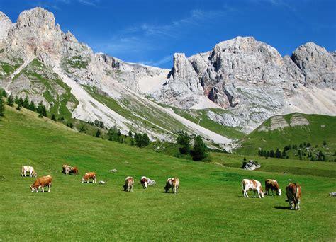 Di Montagna by Paesaggio Di Montagna Con Mucche Al Pascolo Montagna
