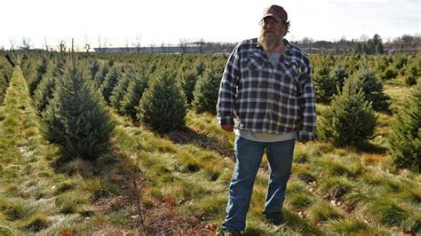 christmas tree farms allentown pa tree growers on hunt for lanternflies the morning call