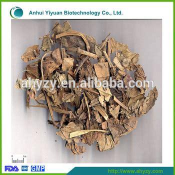 Yu Xing Cao Ekstrak Heartleaf Houttuynia Herb Herba Houttuyniae herb medicine herba houttuyniae yu xing