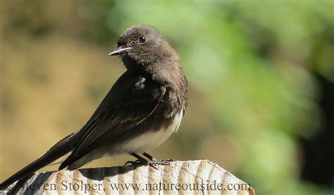 where do birds go when it rains natureoutside