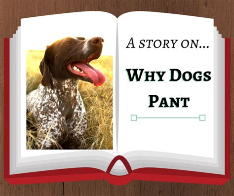 why do humans sweat and dogs pant nuvet labs