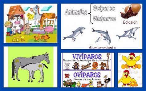 Imagenes De Animales Oviparos Viviparos Y Ovoviviparos | animales ov 205 paros y viv 205 paros cmap