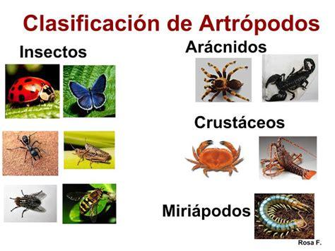 imagenes animales artropodos la chachipedia artr 243 podos