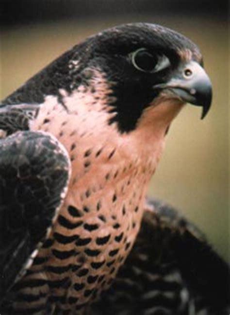 Coastal Kitchen St Simons Island Ga - nest building habits of birds of prey male models picture