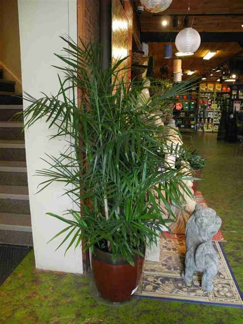houseplants  purify  air  images