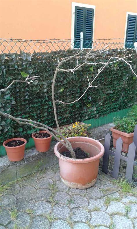 giardino forum consiglio per giardino e glicini