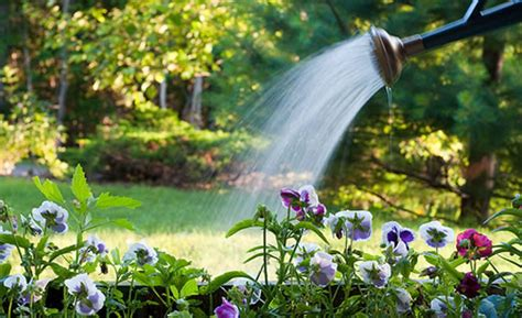 Watering Garden by Water Saving Garden Irrigation Blue Living Ideas