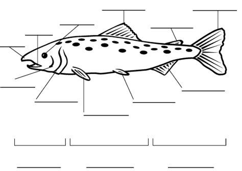 fish diagram coloring page houghton mifflin reading grade 4 theme 6 label a diagram