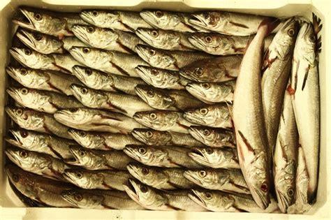 di commercio san benedetto tronto staff al lavoro lory pesca commercio prodotti ittici