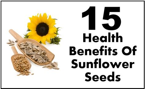 black sunflower seeds benefits benefits of sunflower seeds pictures to pin on pinsdaddy