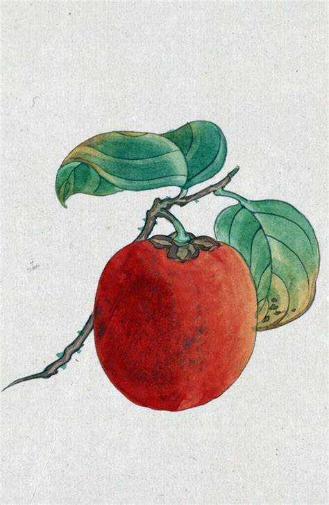 36 best fruits and vegetables images on vegetables watercolor fruit and drawings
