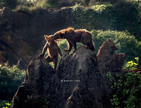 imagenes increibles de animales hermosas imagenes de animales salvajes en su habitat narutal