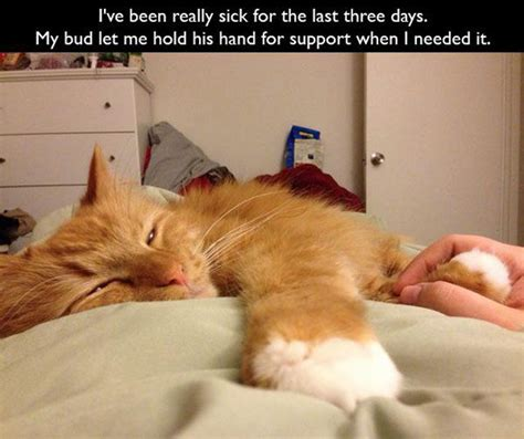 Sick In Bed Meme - cats are a very special kind of pet 22 pics 2 gifs