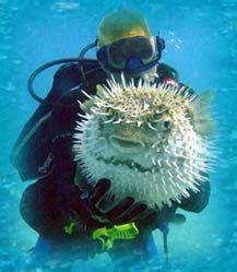 plomeria humacao scuba diving palmas del mar humacao puerto rico with sea