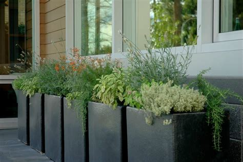 Container Plant Ideas Front Door by Container Gardening Ideas Landscape Traditional With