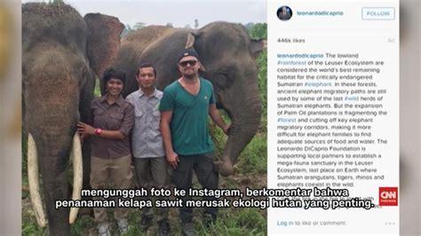 film dokumenter lingkungan hutan indonesia muncul di film dokumenter leonardo