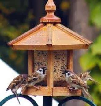 Pakan Lolohan Gereja cara mudah ternak burung gereja