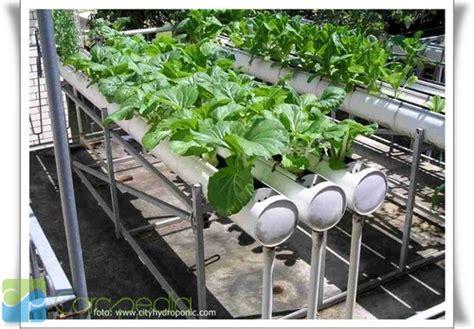 menanam jambu hidroponik bercocok tanam dengan cara hidroponik wisata kabupaten