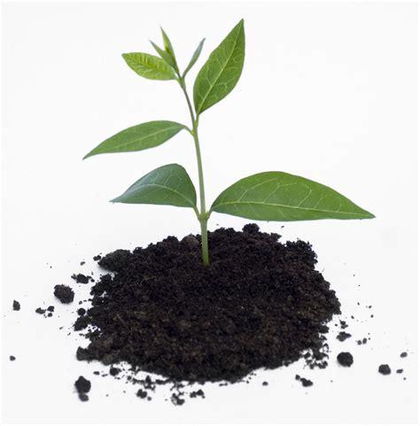 Pupuk Cair Grow More bpp among tani kalikajar pupuk organik