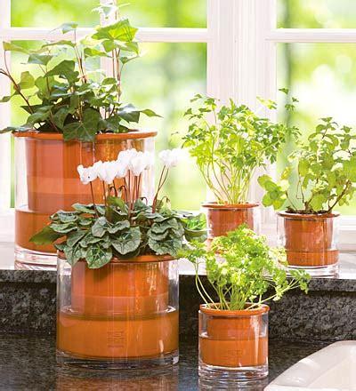indoor plants  home decoration decoration ideas