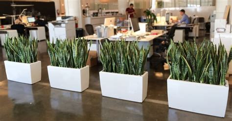 plants for office benefits indoor plants to your office green and