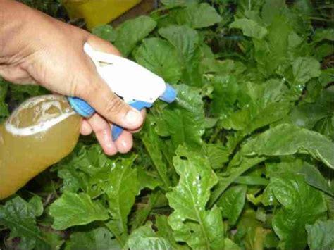 Imagenes De Insecticidas Naturales | 7 insecticidas naturales para plantas casas ecol 243 gicas