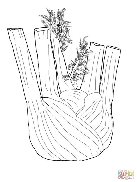 fennel root coloring page  printable coloring pages