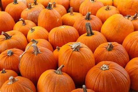 pumpkin background pumpkins backgrounds 50 images