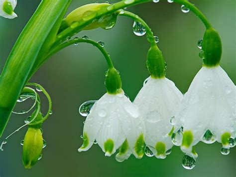 spring flowers drops  rain hd wallpaper wallpaperscom