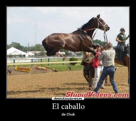 Größte Pferd Der Welt by Memes De Caballos Imagenes Chistosas