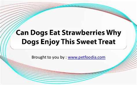can dogs eat spam can dogs eat strawberries why dogs enjoy this sweet treat
