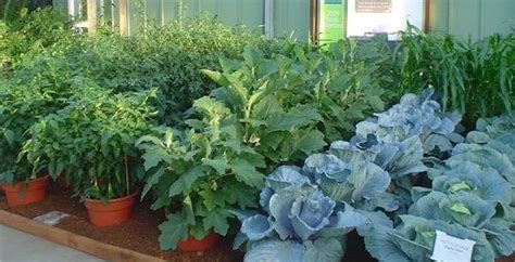how to plant a vegetable garden in pots