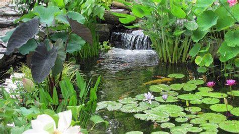 estanque jardin mantenimiento estanque
