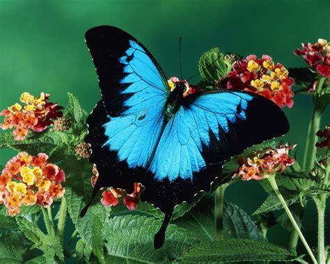 imagenes una mariposa paisaje con una mariposa 1280x1024 fondos de pantalla
