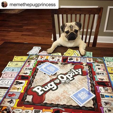 pug opoly 192 best happy customers images on of and photos of