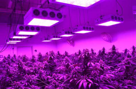led grow room indoor grow lights growing lights minneapolis st paul mn if you havenu0027t heard of led grow
