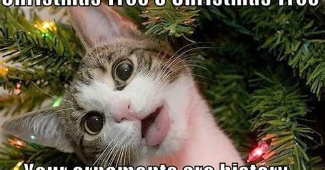 funny cats in christmas trees reaganite independent cats vs trees