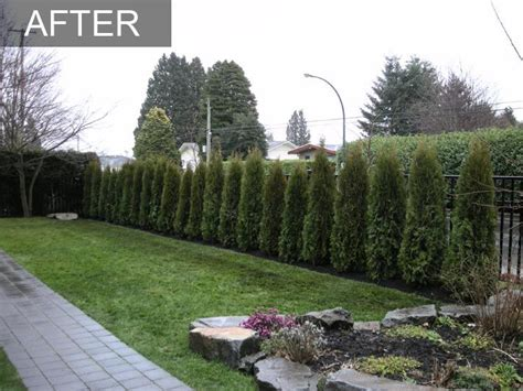 backyard noise barrier hedges privacy walls and fence on pinterest