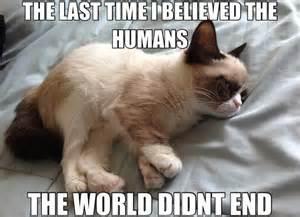 Funny grumpy cat memes 13