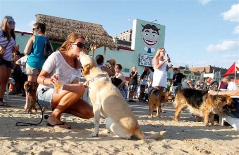 friendly places awesome things to do with dogs in nj funnewjersey