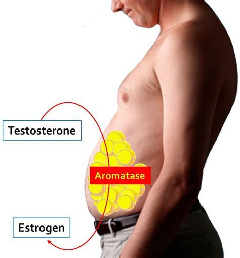 estrogen hormone effect on men get diesel e2 x anti aromatase