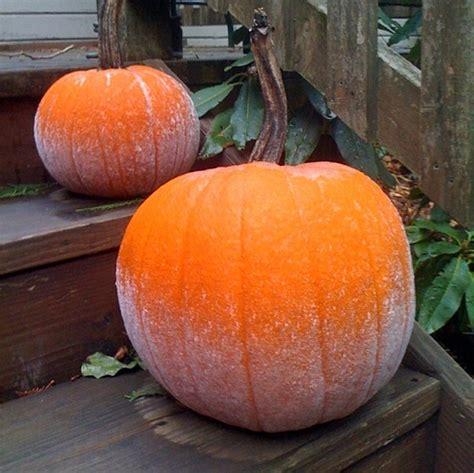 the pumpkin ea o ka aina on the pumpkin
