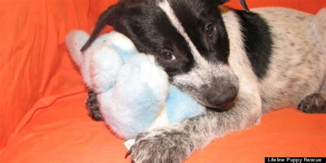 puppy rescue denver lifeline puppy rescue s puppies available for adoption photos huffpost